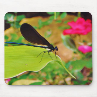 Damselfly and Rose Mousepads
