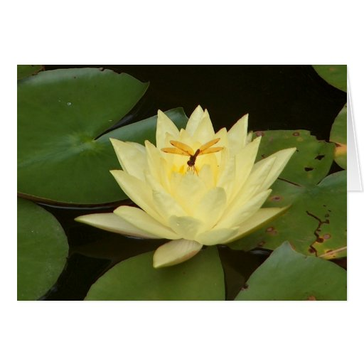 Damselfly on Waterlily Greeting Card