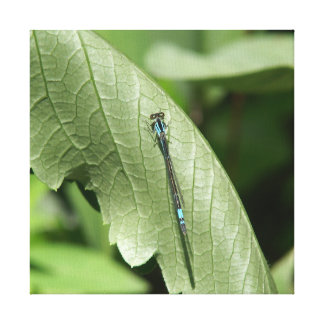 Damselfly, Wrapped Canvas Print.
