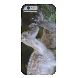 Damwild, Dama dama, fallow deer, Hirschkalb Barely There iPhone 6 Case