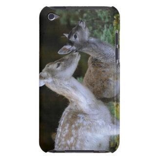 Damwild, Dama dama, fallow deer, Hirschkalb Barely There iPod Cover