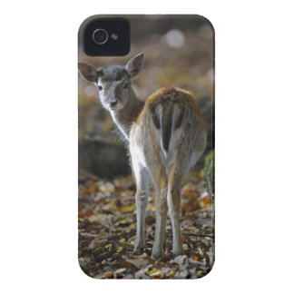 Damwild, Dama dama, fallow deer, Hirschkalb Case-Mate iPhone 4 Case