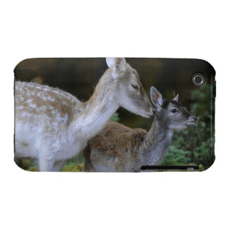 Damwild, Dama dama, fallow deer, Hirschkalb iPhone 3 Case-Mate Case
