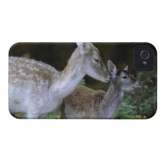 Damwild, Dama dama, fallow deer, Hirschkalb iPhone 4 Case