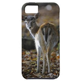 Damwild, Dama dama, fallow deer, Hirschkalb iPhone SE/5/5s Case