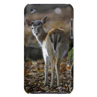 Damwild, Dama dama, fallow deer, Hirschkalb iPod Case-Mate Case