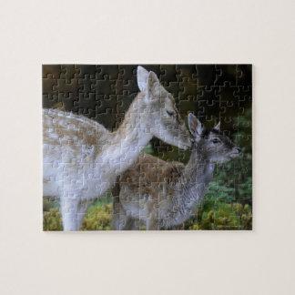 Damwild, Dama dama, fallow deer, Hirschkalb Jigsaw Puzzle