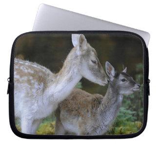 Damwild, Dama dama, fallow deer, Hirschkalb Laptop Sleeve