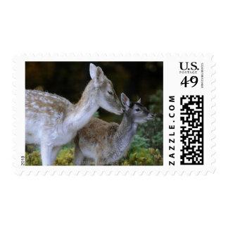 Damwild, Dama dama, fallow deer, Hirschkalb Stamp