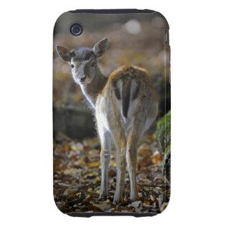 Damwild, Dama dama, fallow deer, Hirschkalb Tough iPhone 3 Cover