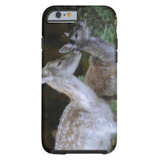 Damwild, Dama dama, fallow deer, Hirschkalb Tough iPhone 6 Case