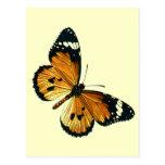 Danaus chrysippus postcard