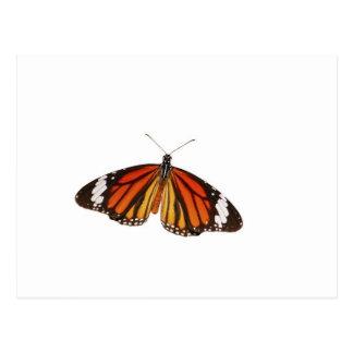 Danaus genutia butterfly postcard