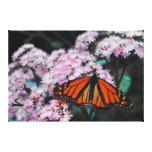 Danaus Plexippus de la mariposa de monarca masculi Impresion En Lona
