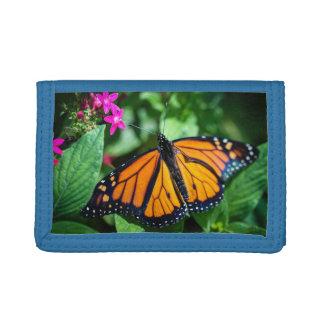 Danaus Plexippus del monarca