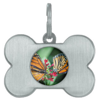 Danaus Plexippus del monarca Placas De Mascota