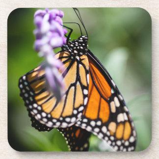 Danaus Plexippus del monarca Posavaso