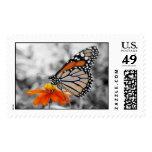 Danaus Plexippus I - Stamp