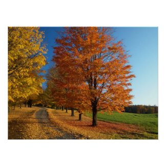 Danby Vermont Autumn Leaves Poster