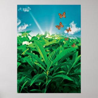 Dance of butterflies Poster