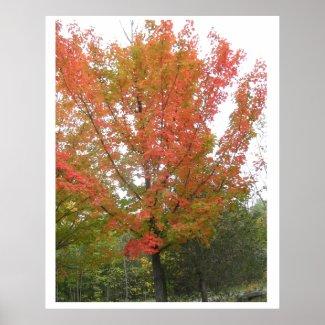 Dance of the Fall Season : ENJOY n share JOY Print