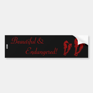 Dance Of The Seahorses (Red) Car Bumper Sticker