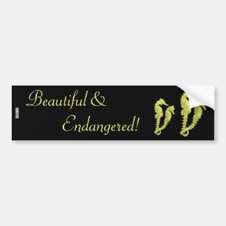 Dance Of The Seahorses (Yellow) Bumper Sticker