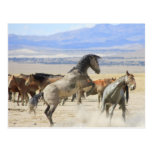 Dances With Hooves Post Card