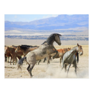 Dances With Hooves Postcard