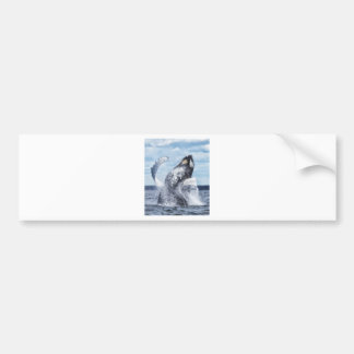 Dances with Whales Bumper Stickers