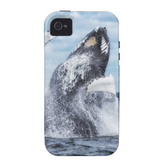 Dances with Whales iPhone 4/4S Covers
