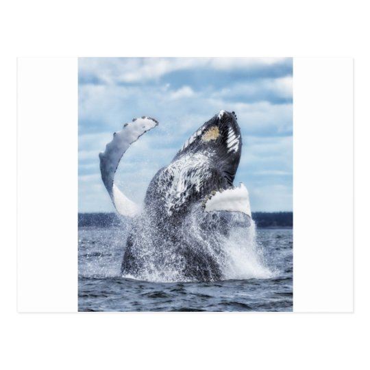 Dances with Whales Postcard