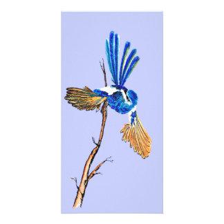 Dancing Blue Fairy Wren Australian Bird Print Card