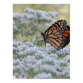 Dancing Butterfly Postcard
