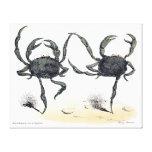 Dancing Crabs On Cloth Canvas Print