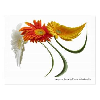 Dancing daisies postcard