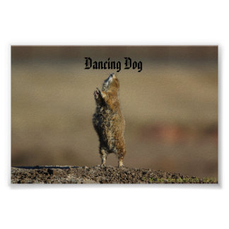 dancing dog  poster