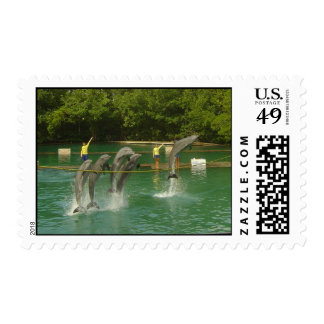Dancing Dolphins in Miami Stamp