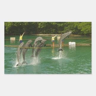 Dancing Dolphins in Miami Rectangular Sticker