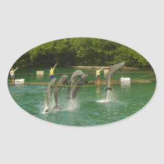 Dancing Dolphins in Miami Oval Sticker