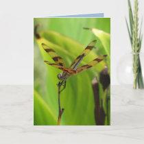 Dancing Dragonfly Birthday Card
