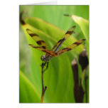 Dancing Dragonfly Birthday Cards