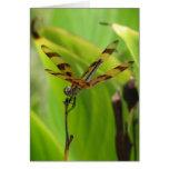Dancing Dragonfly Greeting Card