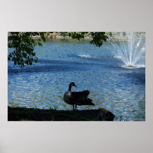 Dancing Duck near fountain Poster