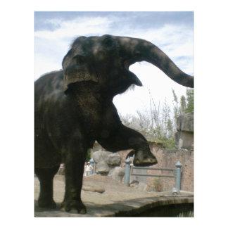 Dancing Elephant Letterhead