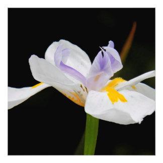 Dancing Flower Photo Print