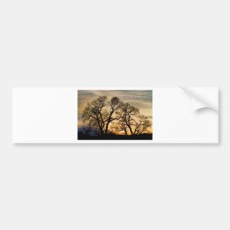 Dancing Forest Trees In The Golden Light Bumper Sticker