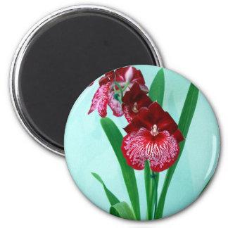 Dancing Ladies Orchids Magnet