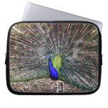 Dancing Peacock Computer Sleeves
