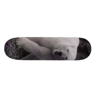 dancing polar bear skate board